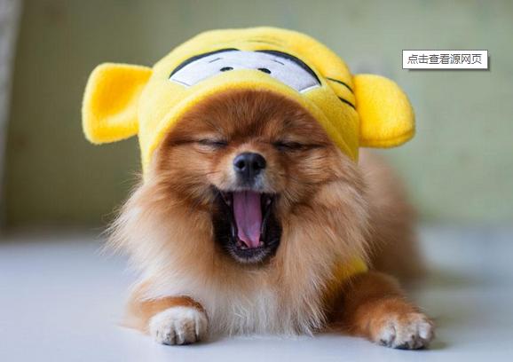 如何治疗狗狗的恐惧感?